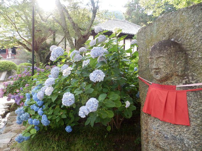 1万株のアジサイと石仏・仏堂とのコラボ!「矢田寺」(大和郡山市)