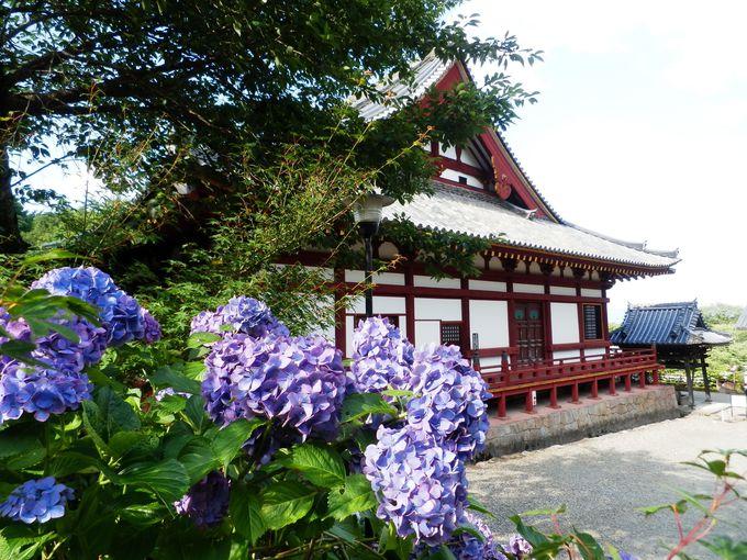仏堂との組み合わせも!奈良県屈指の規模を誇る本堂とアジサイ
