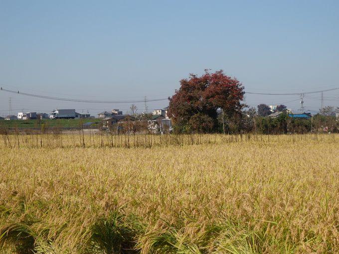 田畑のなかにわずかに残る線路跡