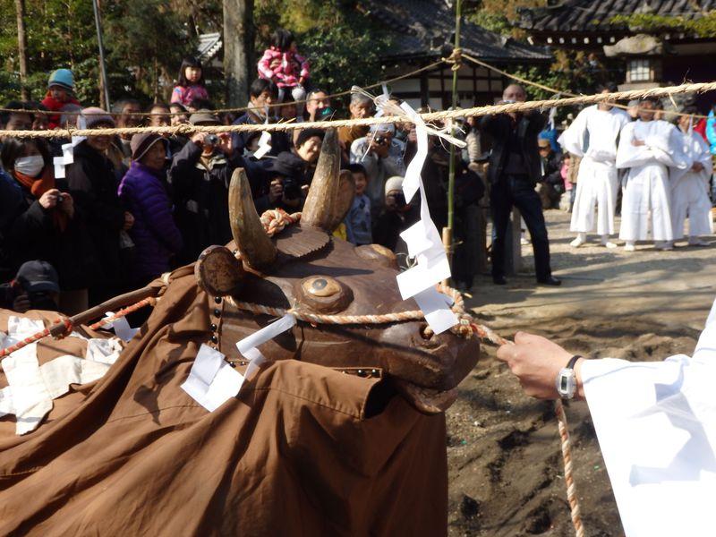 牛大暴れ!奈良・鏡作神社「おんだ祭」で五穀豊穣を祈願する