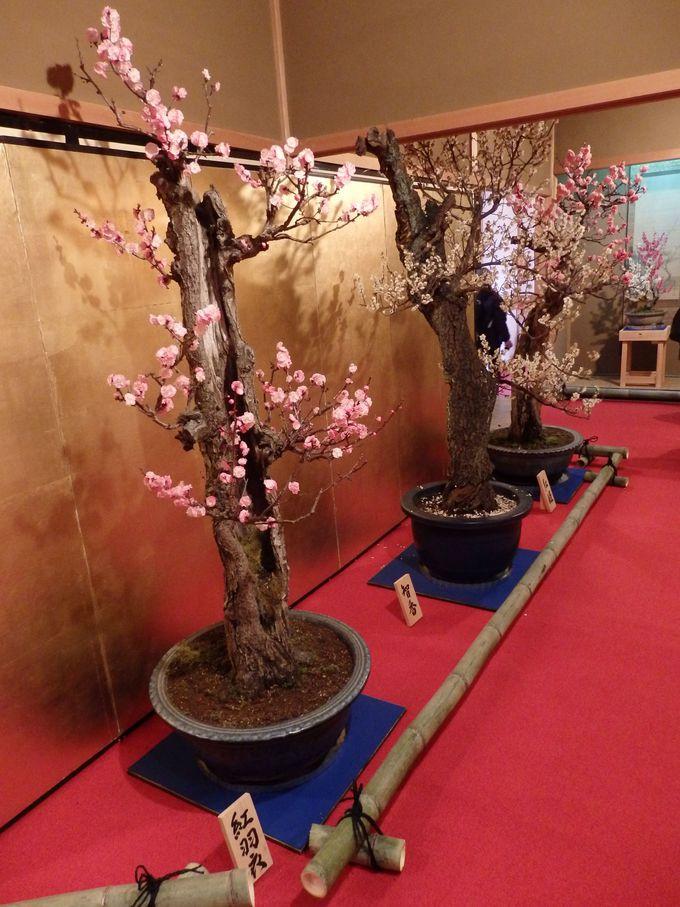 さまざまな巨木も多数展示