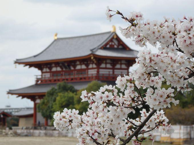 いましか見られない!?1998年に復原された朱雀門と桜との組み合わせ