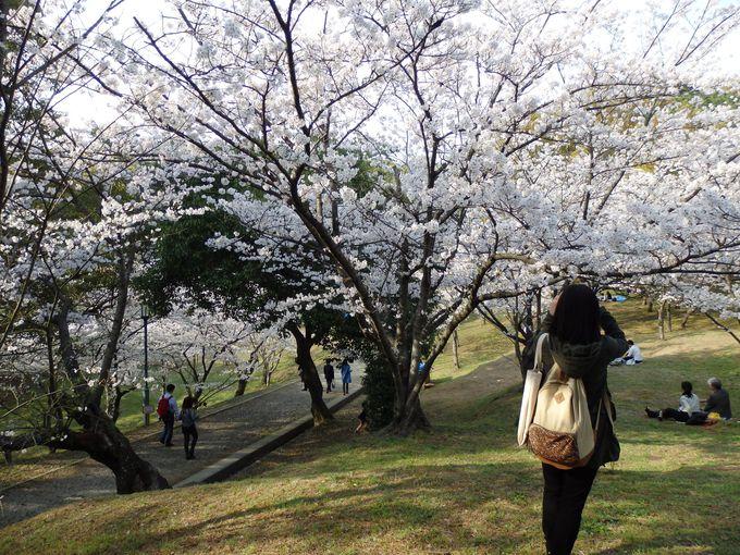 桜が集中的に植えられている「さくら谷」