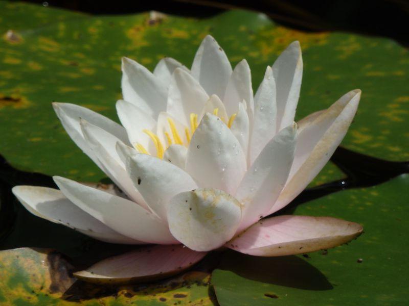大阪商人の粋な心意気!和泉市久保惣記念美術館で庭園も堪能