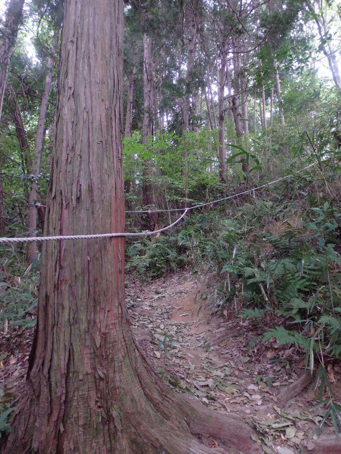 歩行には気をつけて!益田岩船までの険しい山道