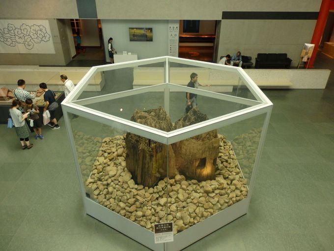 古代の出雲大社はさらに巨大だった!?2000年に発見された宇豆柱