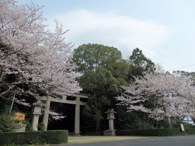 奈良県出身の戦没者をまつった護国神社社前の桜