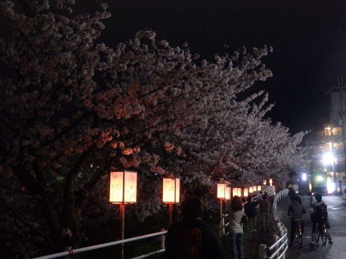 シーズン中は多くの人で賑わう!佐保川の夜桜