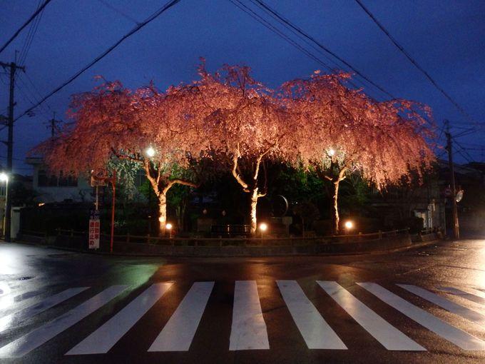 夜桜見物の出発点!大仏鉄道記念公園のしだれ桜