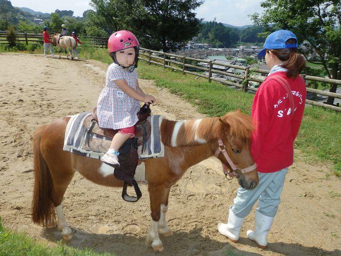 子どもたちに大人気!ポニーの乗馬体験