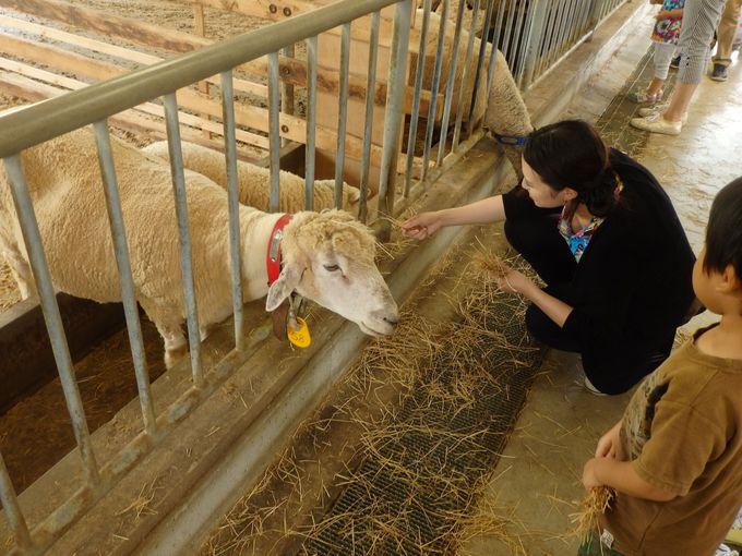 動物たちと触れ合おう!楽しいエサやり体験
