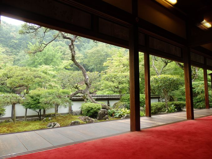 平安時代創建の古刹!新緑を満喫出来る塔頭・福寿院からの眺め