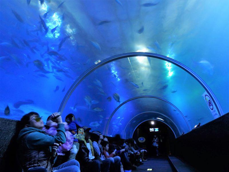 和歌山にサンゴ礁?太平洋の生き物と触れ合える串本海中公園