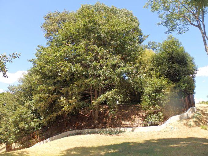 被葬者は河内王権の始祖王?巨大な長持型石棺が埋葬されている後円部