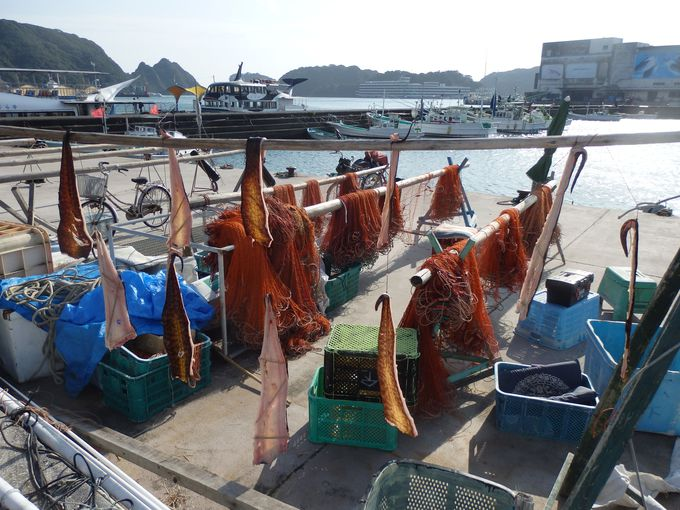吊るされたものの正体は?勝浦漁港の風景