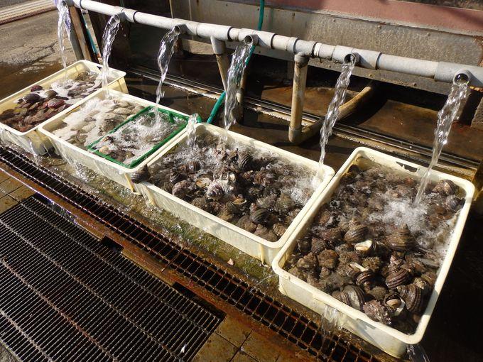 水揚げされたばかりの海産物が目白押し!店先で売られている生サザエ