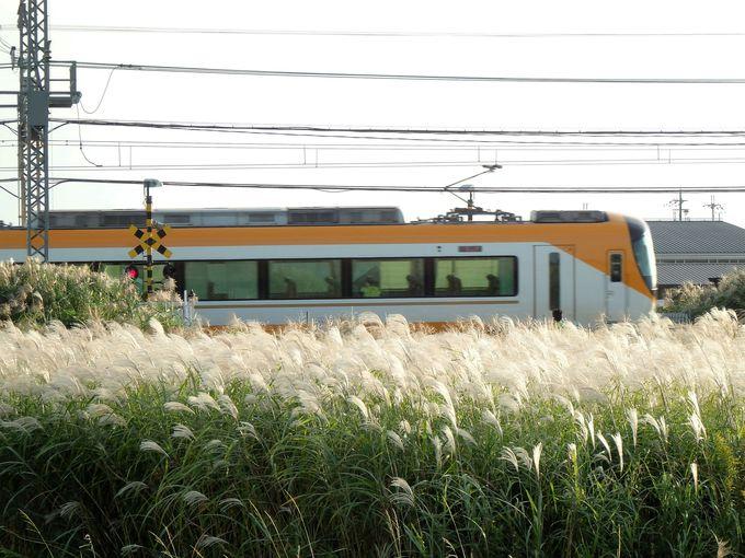 これは珍しい!ススキ原を走る近鉄電車