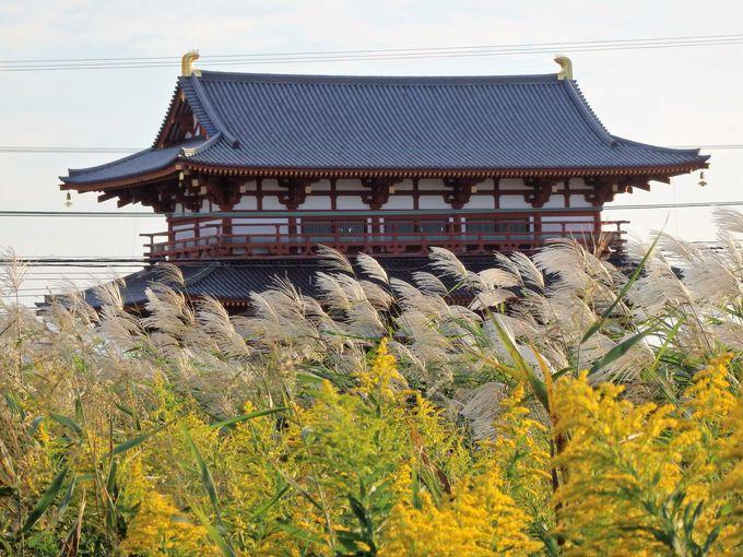 ススキとセイタカアワダチソウが織りなす光景!朱雀門の眺め