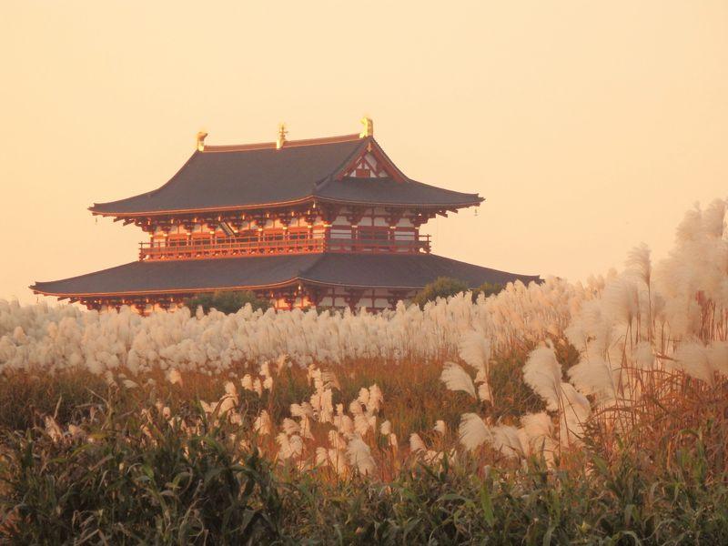 格好の被写体!奈良の世界遺産・平城宮跡はススキの隠れ名所