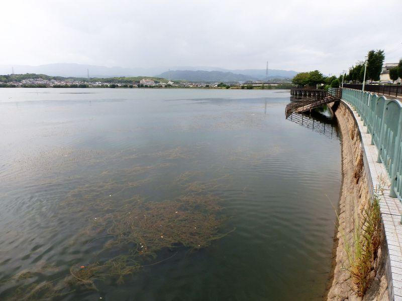 広大な水面積を有する久米田池
