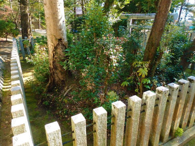 ここに王が眠る!?高倉神社の脇に残る以仁王の陵墓