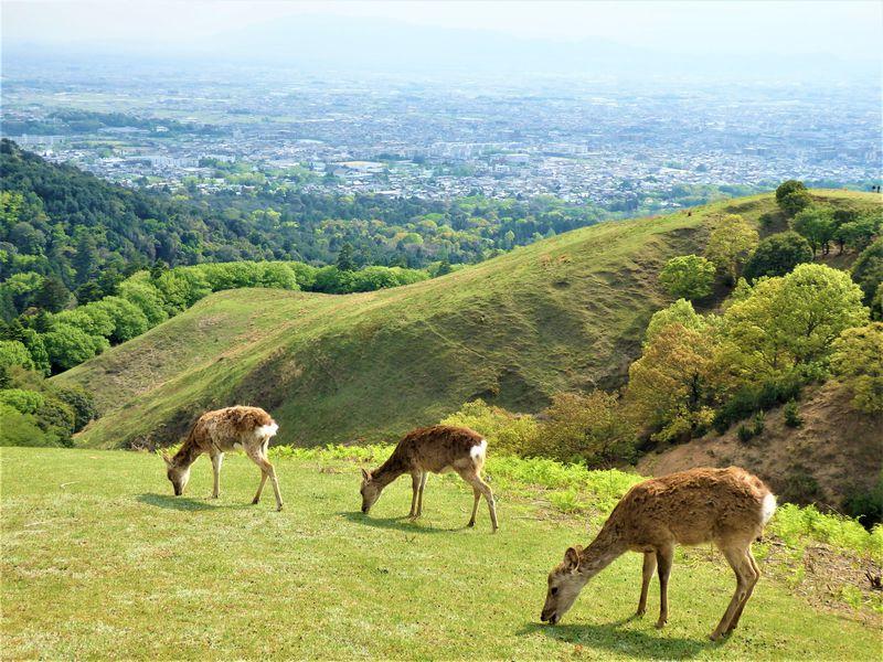 奈良のおすすめ絶景スポット10選 歴史に大自然に絶叫系まで!?