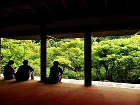 新緑を愛でながら文化財を堪能!京都の世界遺産・高山寺