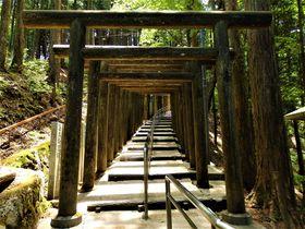 奈良の山中に伏見稲荷大社!?千本鳥居が出迎える立里荒神社