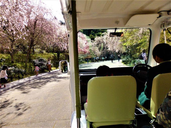 電気自動車に乗れば楽チン!電気自動車からの眺め