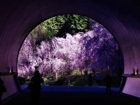春におすすめの旅行先10選!絶景お花見から旬のグルメまで