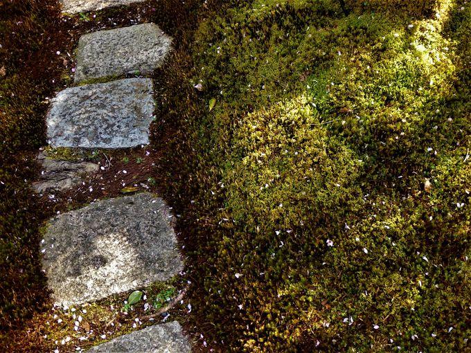 散り初めも美しい!緑の絨毯に散りばめられた花びら