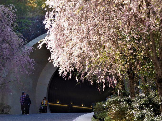 幻想的なトンネルからの眺め