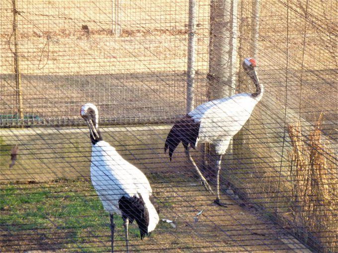 野外飼育場に隣接する飼育ゲージ