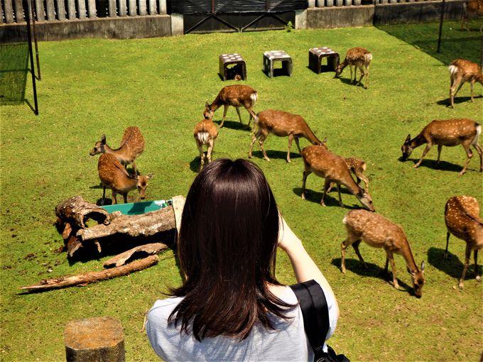 小鹿を公開する鹿苑