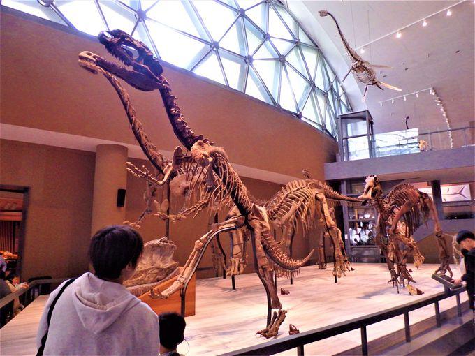 化石の宝庫!たくさんの恐竜の化石が展示されたブース