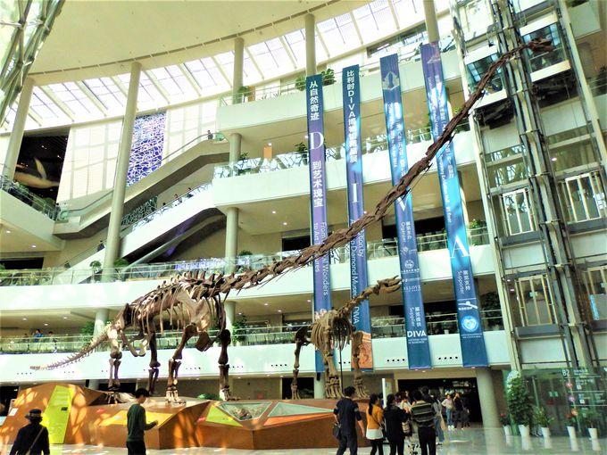 中国最大級の竜脚類がお出迎え!2015年リニューアルの上海自然博物館