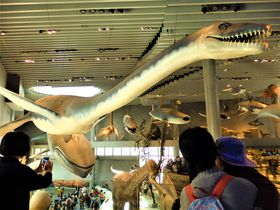 動物が空を泳ぐ!?中国最大級の規模を誇る上海自然博物館