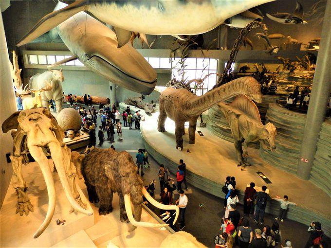 さまざまな動物が目白押し!上海自然博物館の目玉ゾーン「生命長河」