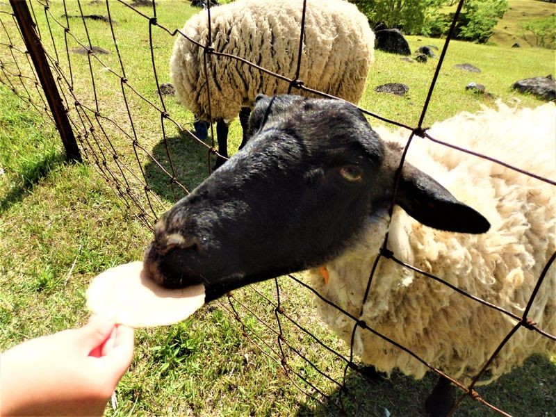 自然を満喫!動物と触れ合える奈良県山添村「めえめえ牧場」