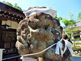 満身創痍?痛々しい包帯姿の狛犬が鎮座する滋賀県の兵主大社