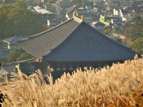 ススキを眺めながら古都・奈良を満喫!秋の若草山登山