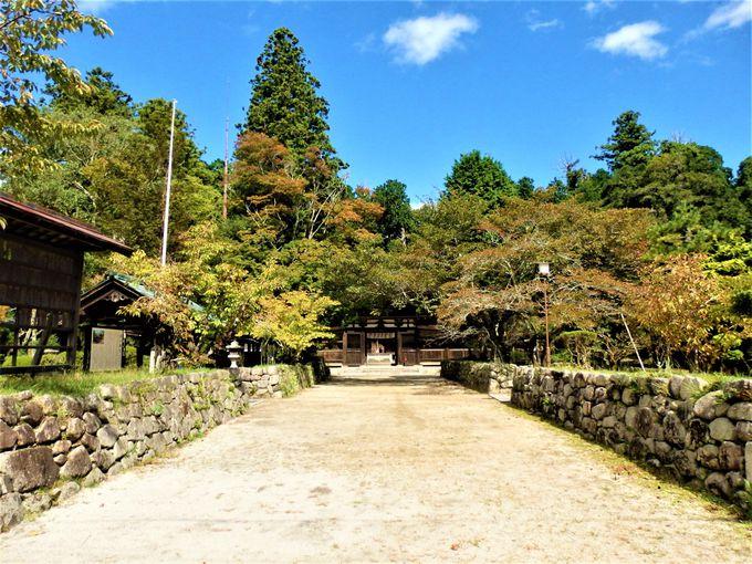 こちらもあわせて拝観しよう!甲賀歴史民俗資料館やコウヤマキの巨木