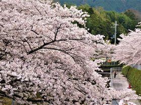 さすがは奈良!古墳も楽しめるお花見スポット「屋敷山公園」