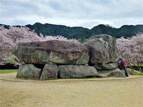 古代のロマンを満喫!奈良県明日香村「石舞台古墳」のお花見
