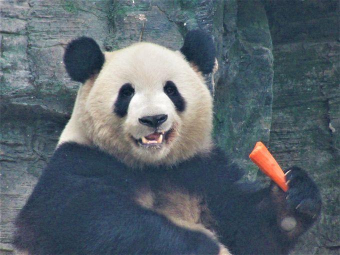 やっぱりパンダ!別料金の「大熊猫館」