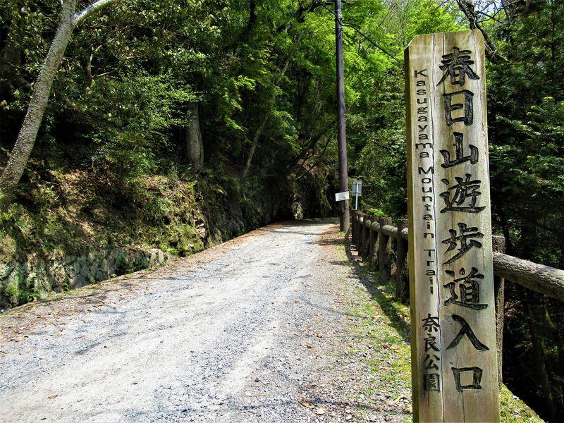 森林浴を楽しみながら若草山へ!奈良市「春日山遊歩道」