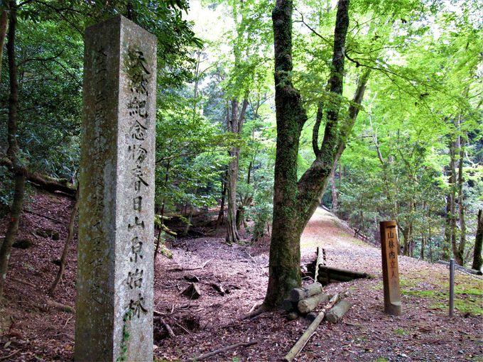森林浴を楽しもう!古代の森が息づく春日山原始林