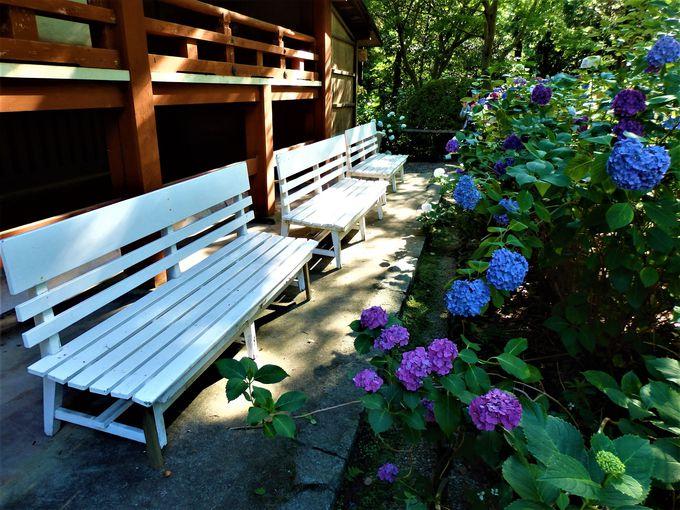 腰を下ろしてゆっくり鑑賞しよう!園内に設置されているベンチ