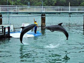 動物たちのショーを楽しもう!三重県「イルカ島(日向島)」