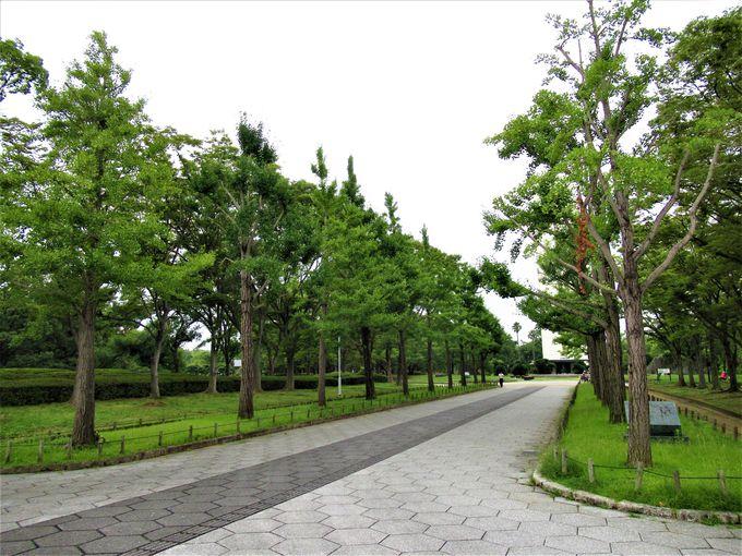 大山古墳の南に位置する広大な「大仙公園」